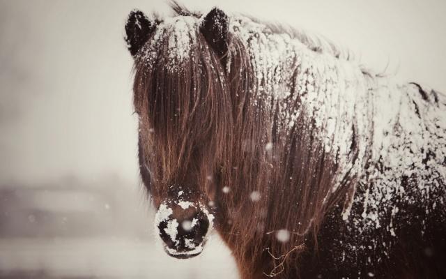SNOW COAT