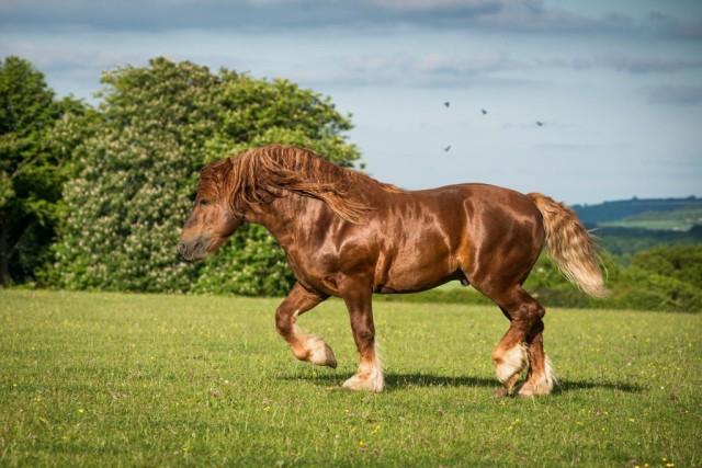 BIG FAT HORSE
