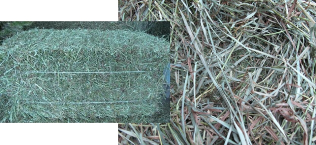 premium-grass-hay