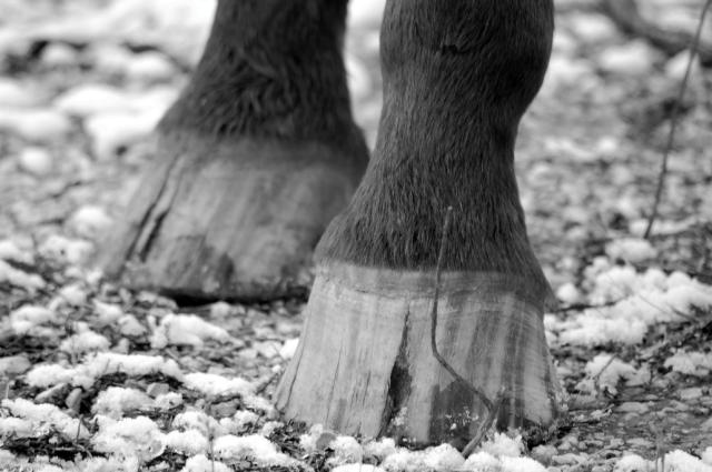 poor-hooves