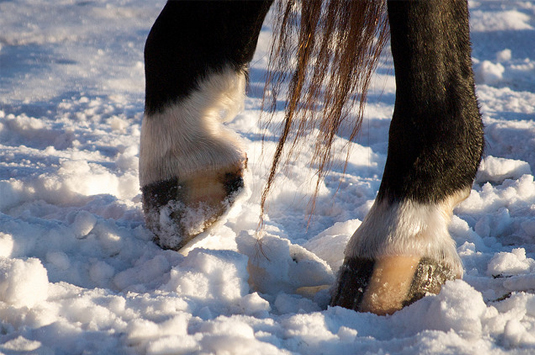 winter-hoof